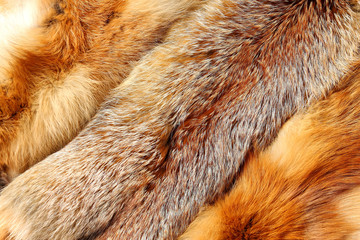 The fox fur