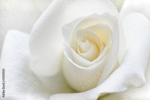 Panel Szklany Soft white rose