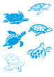 Tortues divers
