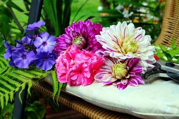 Dahlia Dahlien Blumen auf Stuhl
