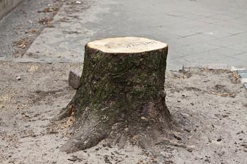 Baumstumpf mit Aufschrift