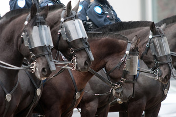 Police horses with visors