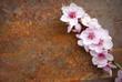 fiori di pesco su sfondo ruggine