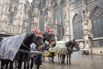 horse carriage in Vienna, Austria