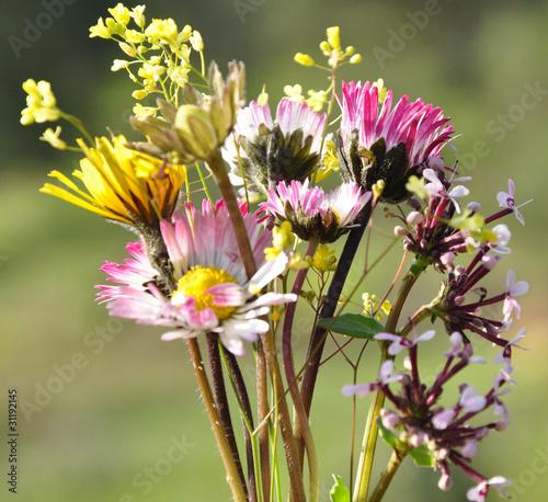 Bouquet de fleurs sauvages de celeste clochard photo for Bouquet de fleurs sauvages
