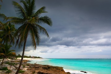 Caribbean stormy day palm trees in Tulum Mexico