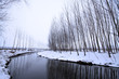 river and trees in the snow in winter