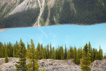 Peyto Lake, the Fox Headed Lake in Banff NP Canada
