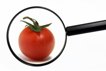 tomate hinter lupe