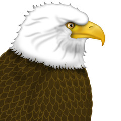 American Bald Eagle Portrait