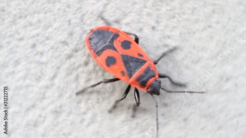 Firebug sits on cement wall