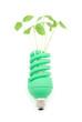 電球と新芽