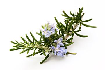 Rosmarinzweig mit Blüten II, Makro, isoliert
