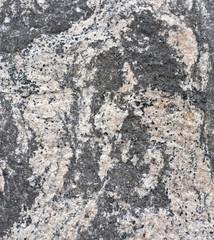 Folded gneiss with amphibolite, feldspar, and quartz