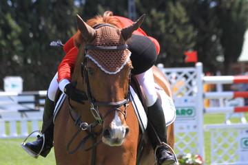 turnier - pferd loben