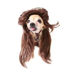 wig rocking dog