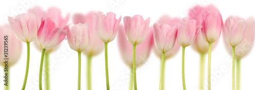 rozowi-tulipany-kolaz-wiosna-kwiaty