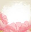 pink petals of a flower on grunge background