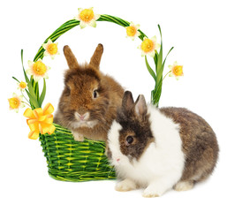 rabbits in basket with narcissus and bow