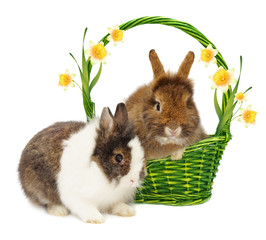 rabbits and basket and narcissus