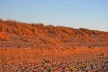 Dune in Sunset Light