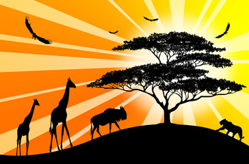 giraffes, panther and other animales over sunrise near acacia