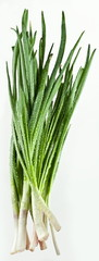 Green onions bunch on a white background