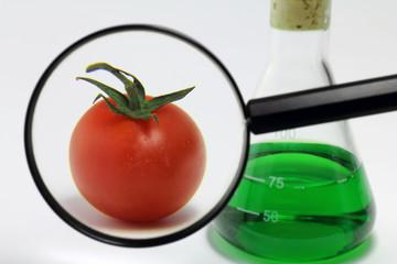 Tomate mit Laborkolben