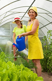 Women watering vegetables