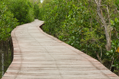 footpath between mangrove