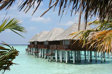 Maldives 葉の間から見える水上コテージ