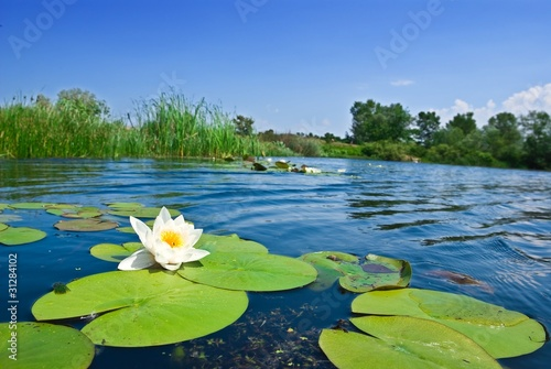 Fotobehang Water planten summer river with floating lily