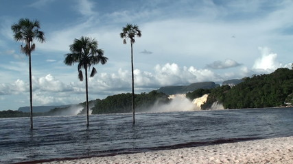 Three palms and waterfalls in Canaima NP