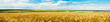 Leinwandbild Motiv Panoramic view of a wheat field