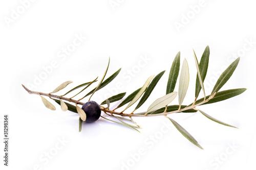 Aluminium Olijfboom Rama de olivo