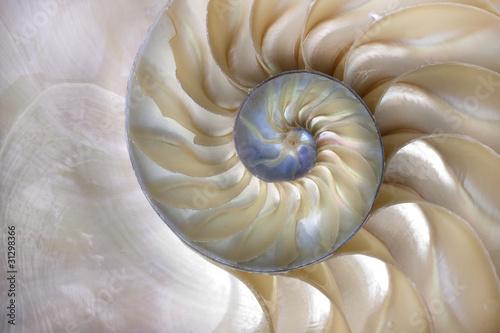 Fototapeta Nautilus