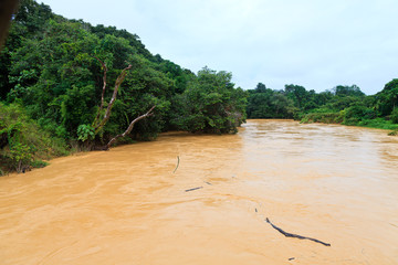 Brown river in the jungle