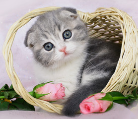 Kitten in a basket of roses.