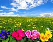 Landschaft Wolken Wiese Blumen