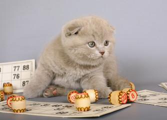 Kitten playing in a bingo.