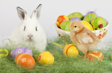 White bunny looking at camera, next to a baby chicken and eggs