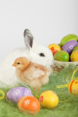 Red baby chicken and white bunny sitting on grass, surrounded by