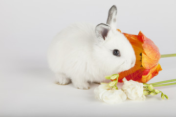 Baby bunny smelling flowers on grey background