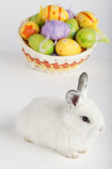 White Easter bunny with painted eggs in a basket