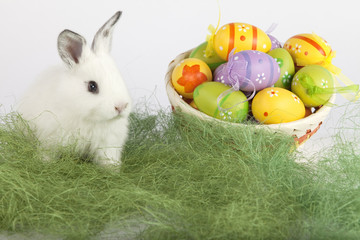 Easter eggs and a cute bunny on grass