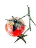 A rotten tomato on the vine with mould / fungus poster