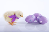 Fototapety One cute baby chicken near three Easter eggs