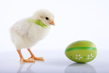 Yellow baby chicken with green Easter egg