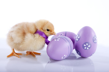 One cute baby chicken near three Easter eggs