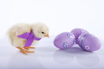 One cute baby chicken near three Easter eggs